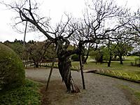 Img_3429